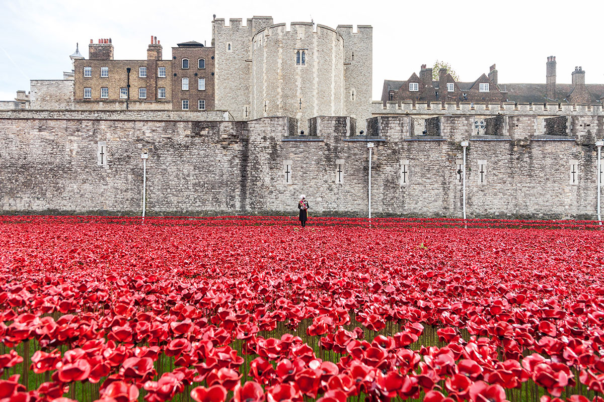 Historic-Royal-Palaces-_11-November-2014—last-poppy-planted-(c)-Historic-Royal-PalacesR-Lea-Hair-(1)